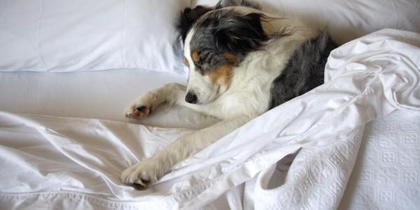 chien-dormir