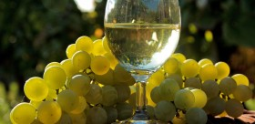 spiritieux-alcool-raisin