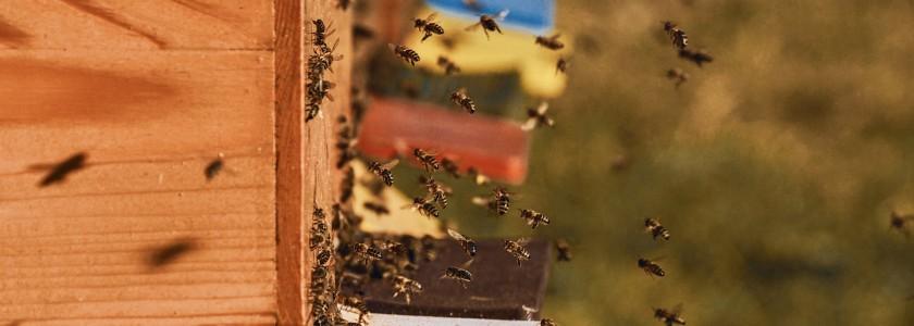 le marche apiculture