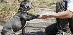dresser un chien